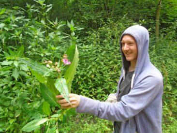 die fremden Pflanzen kann man gut an der Blüte erkennen