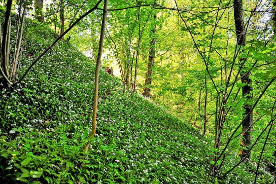 Wald em Mai 2017